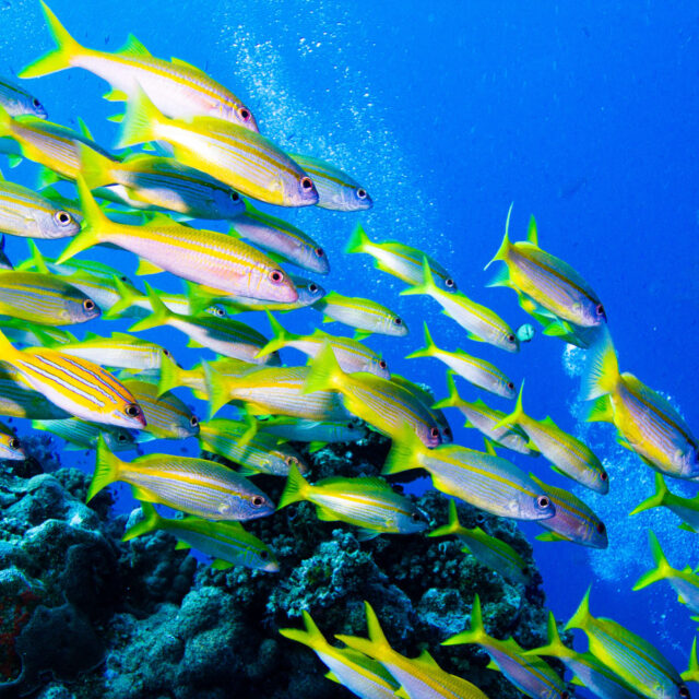 Budget Intro Scuba Dive Day Trip from Cairns Fish
