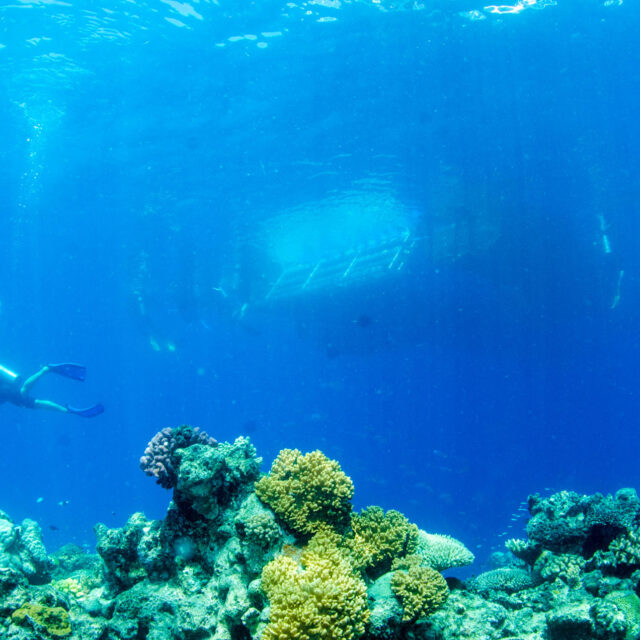 Budget Great Barrier Reef Scuba Dive Corals