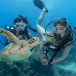See Turtles on a Budget Great Barrier Reef Scuba Dive