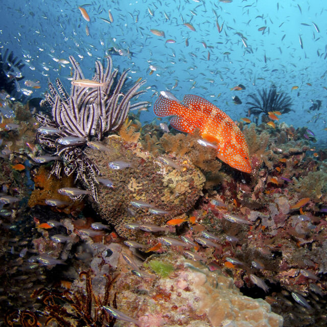 Fish and Coral on a Budget Great Barrier Reef Scuba Dive