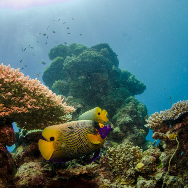 Coral Reef Budget Intro Scuba Dive Day Trip from Cairns