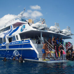 Divers Den ReefQuest Great Barrier Reef Day Trip