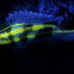 Fluoro dive marine life