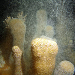 Great Barrier Reef Coral Spawning Trips Cairns
