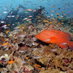 Great Barrier Reef Intro Dive from Port Douglas Fish Life