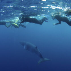 Great Barrier Reef Minke whale expeditions from Cairns