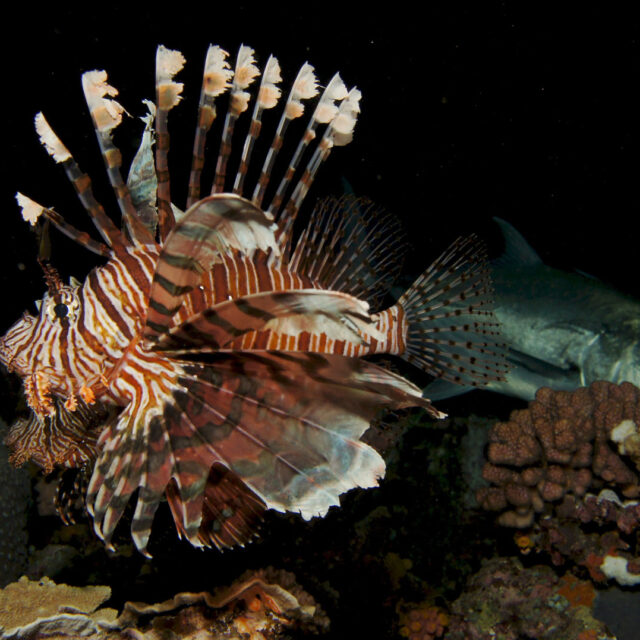 Night diving, Great Barrier Reef