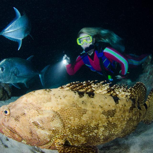 Night diving Great Barrier Reef liveaboard