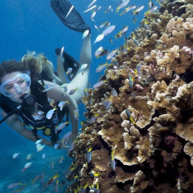 Overnight certified dive trip from Cairns