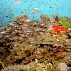 Overnight Snorkel Trip Great Barrier Reef