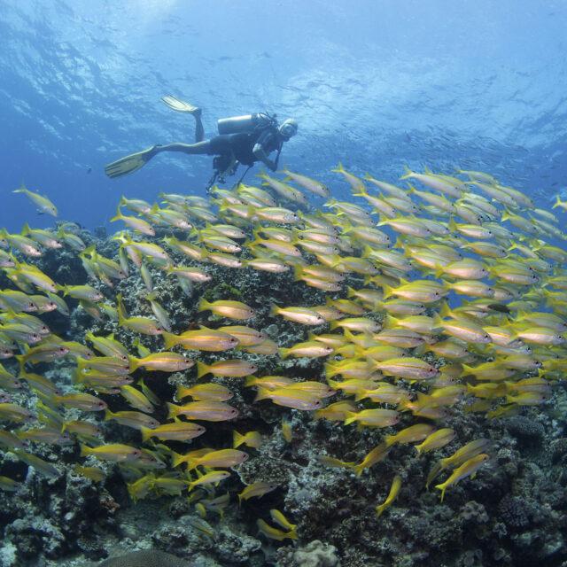 ReefQuest Great Barrier Reef Cert Dive Day Trip