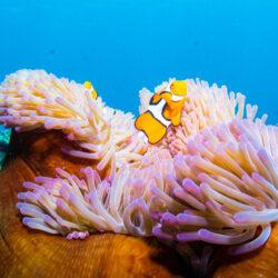ReefQuest Great Barrier Reef Cert Dive Day Trip Nemo