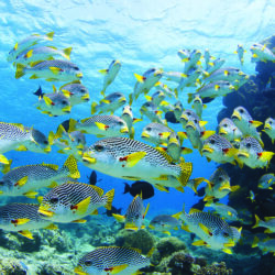 Fish on OuterGreat Barrier Reef Snorkel Day Tour