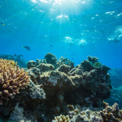 Outer Great Barrier Reef Snorkel Day Trip