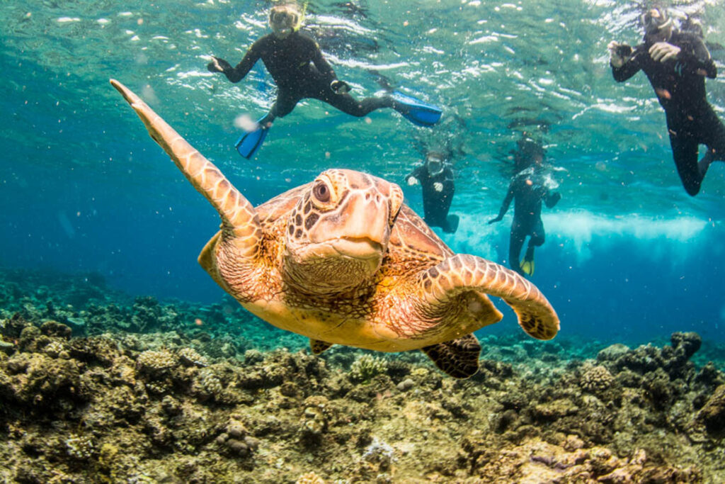 Outer Barrier Reef Snorkel Tour with Turtle