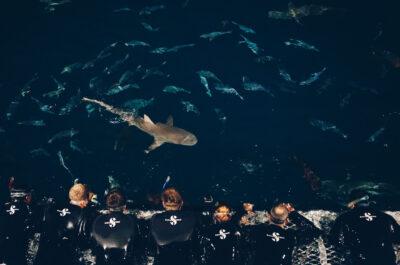 Sharks in the Dark