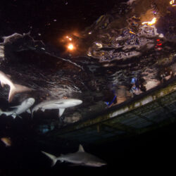 Sharks in the Dark experience OceanQuest