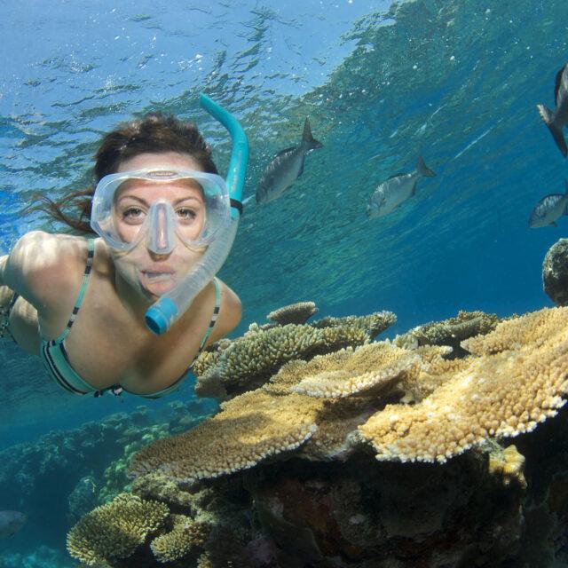 Coral Reef Snorkel Day Trip Port Douglas