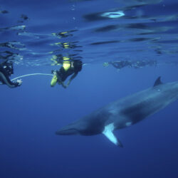 Minke Whale Expeditions from Cairns