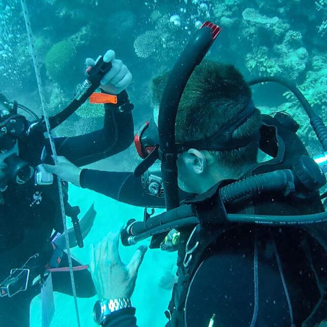 Divers Den Cairns IDC Professional Training