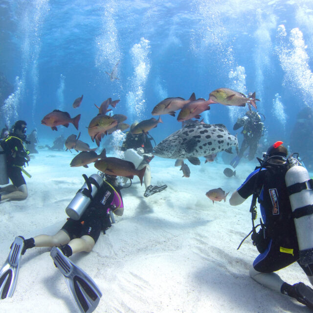 Divers Den Cairns Dive School