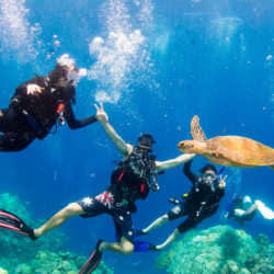 Great Barrier Reef Cruises Divers Den