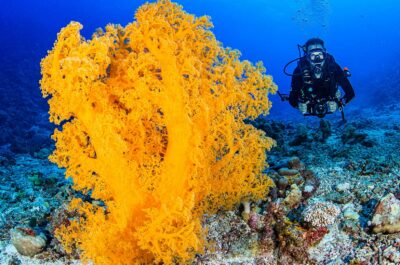 Ribbon Reefs Diving