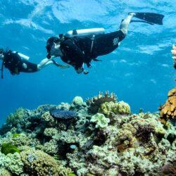 Great Barrier Reef Survey