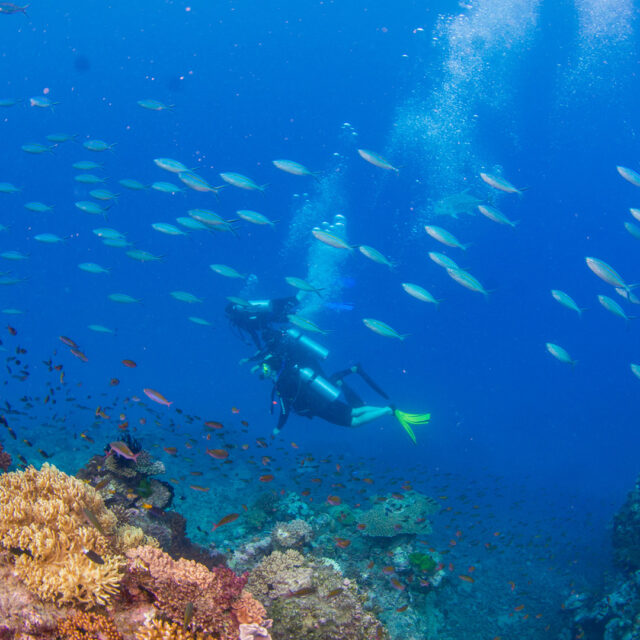 Scuba Divers and Coral Reef, Great Barrier Reef