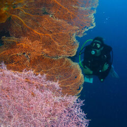 Soft Coral Wall, Great Barrier Reef scuba diving