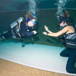 Scuba Diver Course Cairns Pool Skills