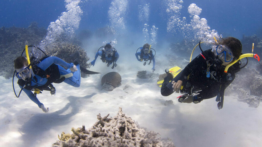 Divers Den Learning to Scuba Dive