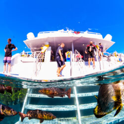 Cairns Divemaster Training Program - day trip vessel