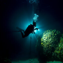 Great Barrier Reef Night Diver