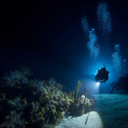 Great Barrier Reef Night Divers