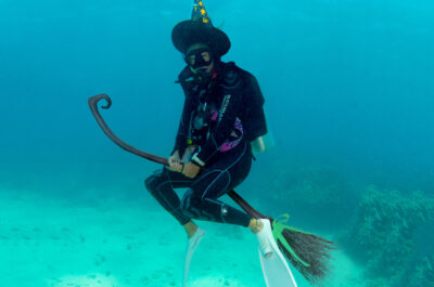 Divers Den Cairns Halloween Dive Trip